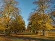 English Autumn colour
