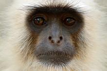 Monkey Detail Portrait. Common...