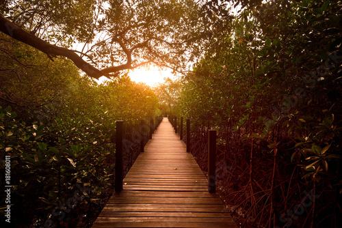 most-w-lesie-namorzynowym