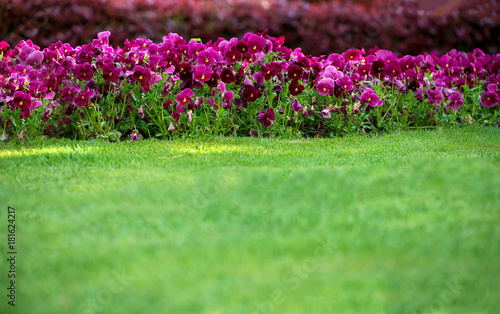 Spring garden on a sunny day