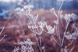 Frost on the leaves and branches in winter. - 181642672