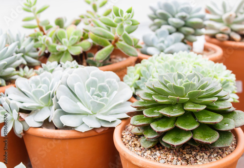 various types of succulent in flower pots in the greenhouse : different types of flower pots - startupinsights.org