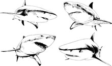Set Of Vector Drawings On The Theme Of Marine Predators Sharks Drawn In Ink By Hand On A White Background