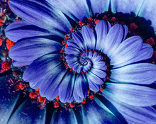 Blue Camomile Daisy Flower Spiral Abstract Fractal Effect Pattern Background. Blue Violet Navy Flower Spiral Abstract Pattern Fractal. Incredible Flowers Pattern Round Floral Swirl Concept Background