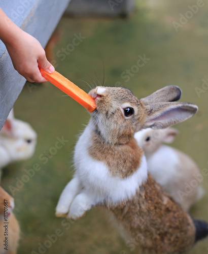 Children feeding rabbits with carrot in the farm.