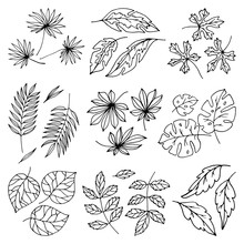 Vector Black Leaves Palm Tree Leaf Summer Nature White Illustration Design Isolated On White Background Tropical Plant Leaflet Foliage Art Exotic Leafy Branch