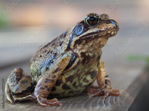 żaba czeka na pocałunek księcia z bajki który zdejmie czar