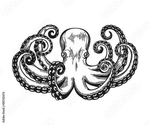 Octopus engraving Canvas Print