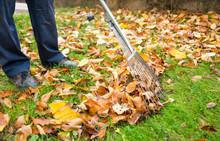 Man Cleaning Fallen Autumn Lea...