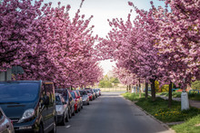 Scenic Springtime View Of A Ci...