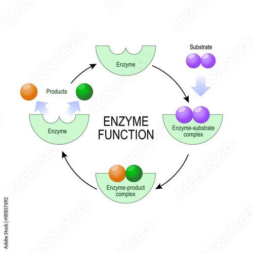 Photo  enzyme function