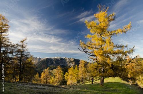 Foto op Canvas Herfst autumn mountain trees in Austria