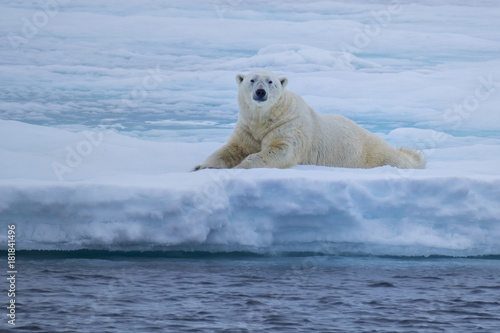 Tuinposter Ijsbeer Polar Bear in the Ice Flows North of Svalbard, Norway