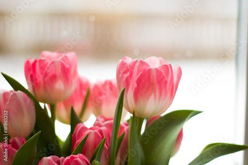 Plakat Tulipany w śniegu