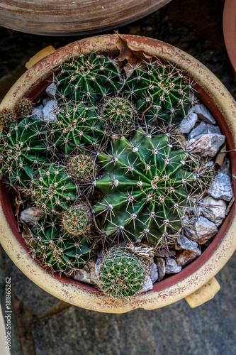 Papiers peints Cactus Cactus in pot