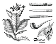 Tobacco Collection Hand Drawin...
