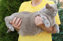 Owner Holding Funny Overweight...