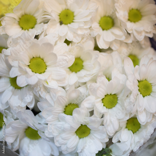 Bouquet of chamomile. Background #181914824