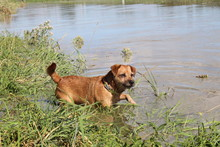 Terrier Testing The River