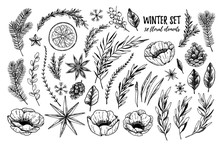 Vector Illustrations - Winter Floral Set (flowers, Leaves And Branches). Hand Drawn Christmas Elements In Sketch Style. Perfect For Invitations, Greeting Cards, Tattoo, Prints, Postcards Etc
