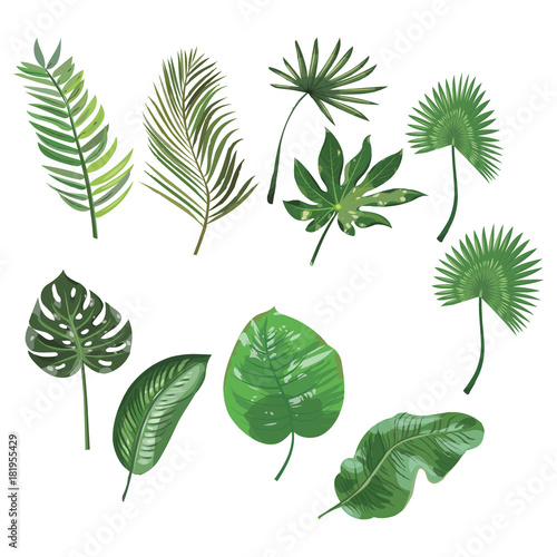 Spoed Foto op Canvas Planten Set of leaves of tropical plants. Collection of exotic leaves. Colored Vector illustration.