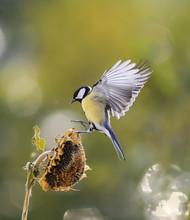 Bird Flies To The Flower Of T...