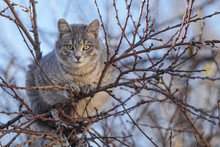Gray Cat On Tree Branches