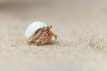 Einsiedlerkrebs Am Strand In S...
