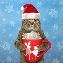The Cat In Santa Claus Hat Hol...