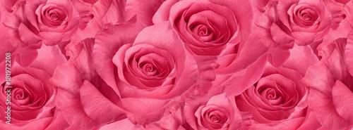 Fotografia cover  beautiful  pink rose