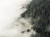 Mgła zakrywająca lasowa góry strona, przyrodnie chmury, przyrodni drzewa, alps, Southtirol, Włochy - 181984430