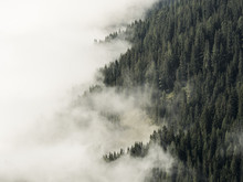 Fog Covered Forest Mountain Si...