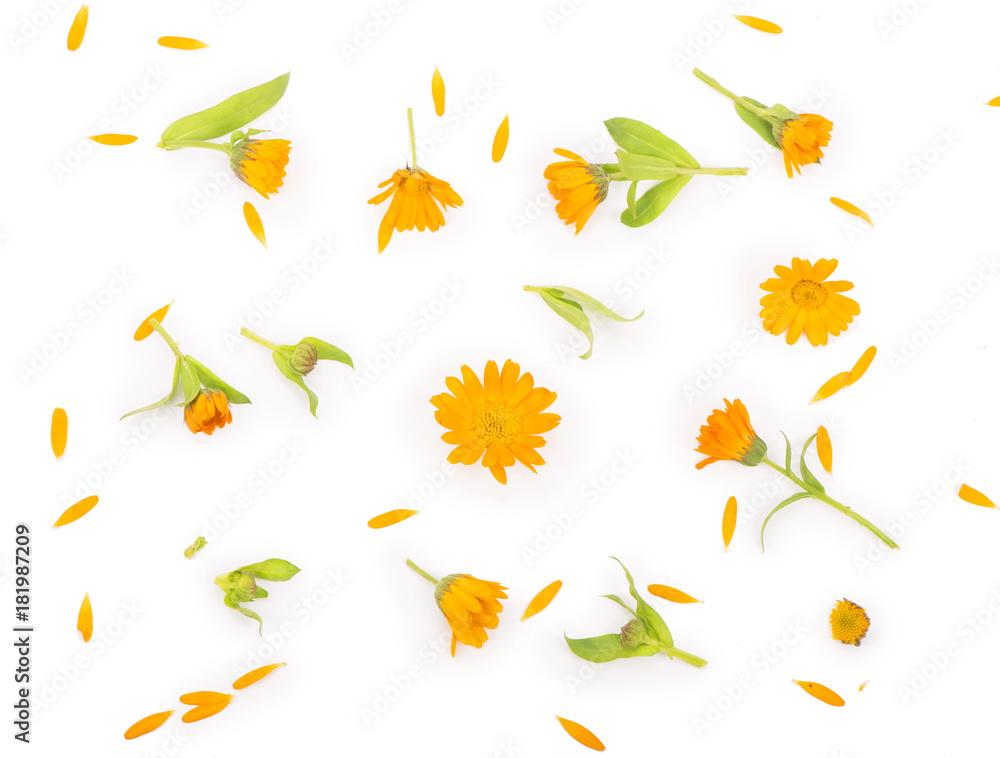 Fototapety, obrazy: Colorful bright pattern of orange calendula flowers