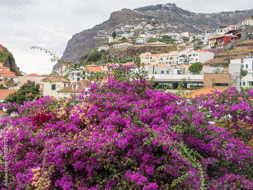 Foto op Plexiglas Groene Die Insel Madeira