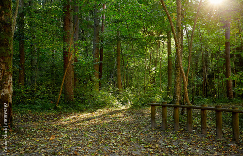 Tuinposter Weg in bos View of forest pathway