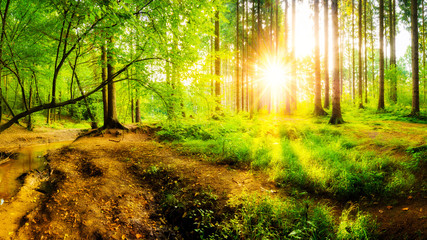 Beautiful sunrise in a forest with creek