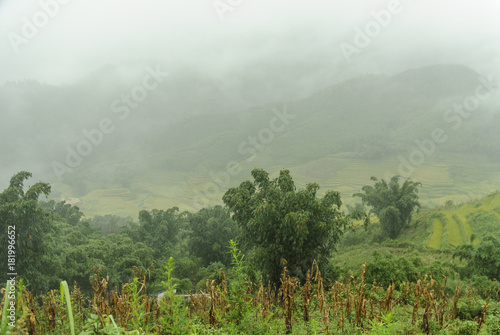 Spoed Foto op Canvas Khaki scenery with rice fields in terraces under the rain and the fog in the Sapa vale in Vietnam.
