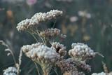 Gloomy Flowers - 182005834
