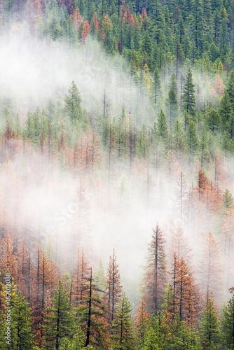 mgla-wsrod-drzew