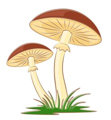 Sketch of mushrooms.