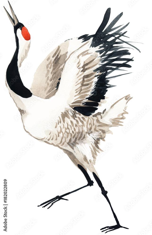 Fotografia Japanese crane bird, watercolor illustration  su