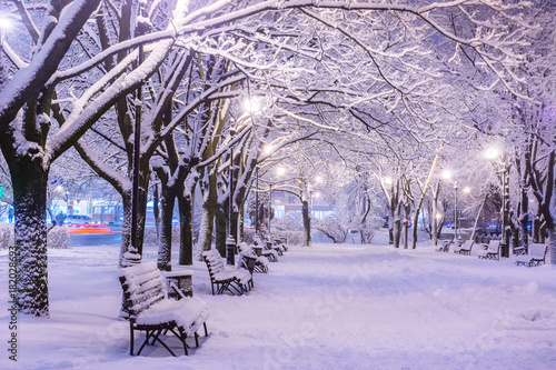 Poster Purple Amazing winter night landscape of snow covered bench among snowy trees and shining lights during the snowfall. Artistic picture. Beauty world.