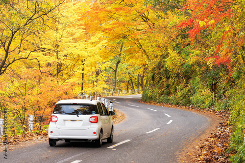 Vászonkép Scene of cars drive along the road with autumn red leaf in Aomori, Japan