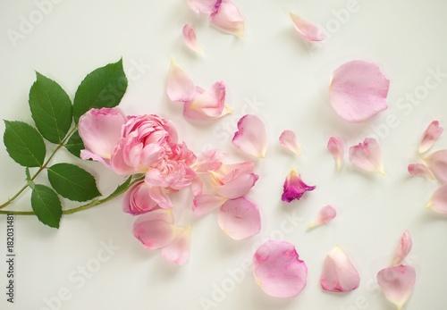散ったバラの花びら、白背景