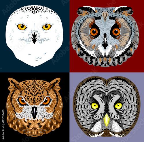 Photo sur Toile Croquis dessinés à la main des animaux a set of owl images