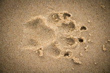 Defined Paw Print In The Sand