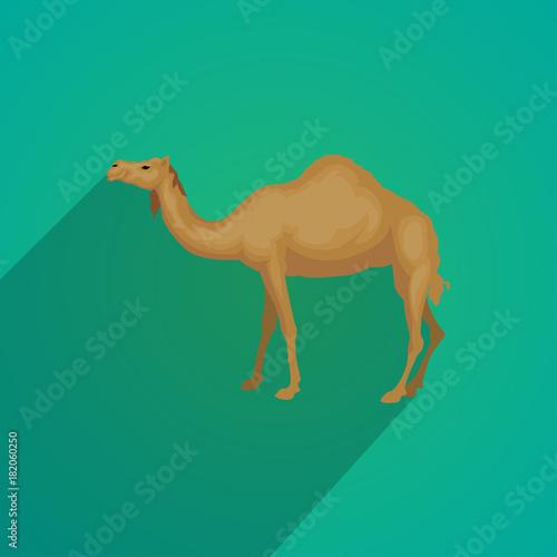 Valokuva  camel flat design
