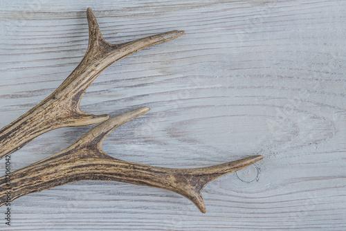 Poster Chasse deer antlers