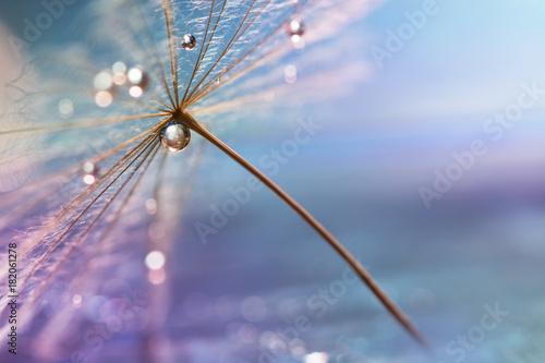 kropla-wody-piekny-makro-dandelion-z-kropla-wody-selektywne-skupienie