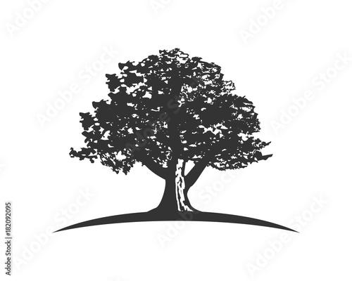 Fotografía  oak capital finance